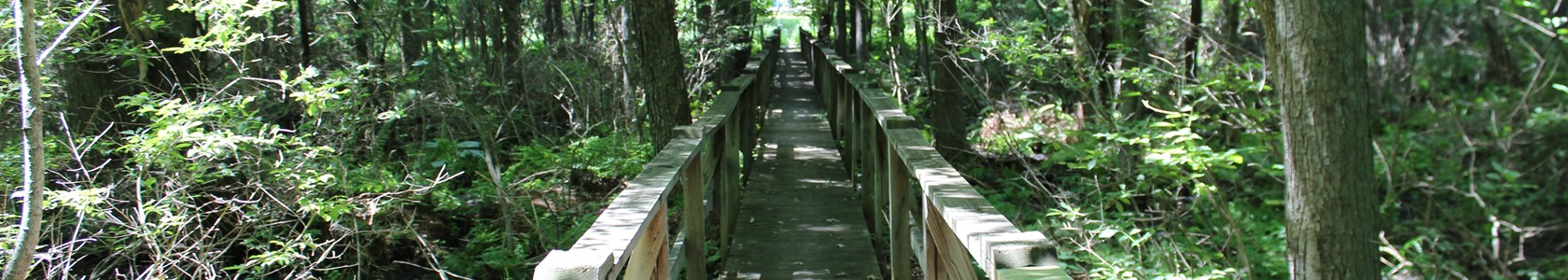 MCC Nature Trails bridge